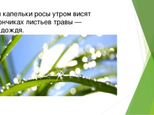 Если капельки росы утром висят накончиках листьев травы — жди дождя.