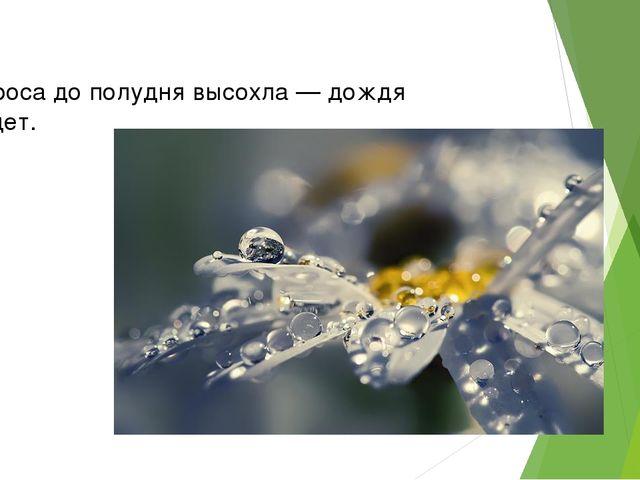 Если роса дополудня высохла — дождя небудет.