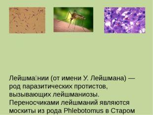 Лейшма́нии (от имени У. Лейшмана) — род паразитических протистов, вызывающих