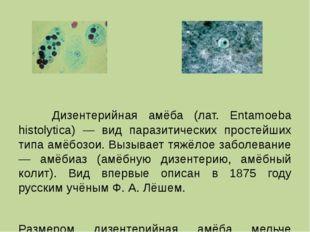 Дизентерийная амёба (лат. Entamoeba histolytica) — вид паразитических просте