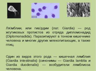 Ля́мблии, или гиа́рдии (лат. Giardia) — род жгутиковых протистов из отряда д