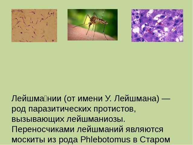 Лейшма́нии (от имени У. Лейшмана) — род паразитических протистов, вызывающих...