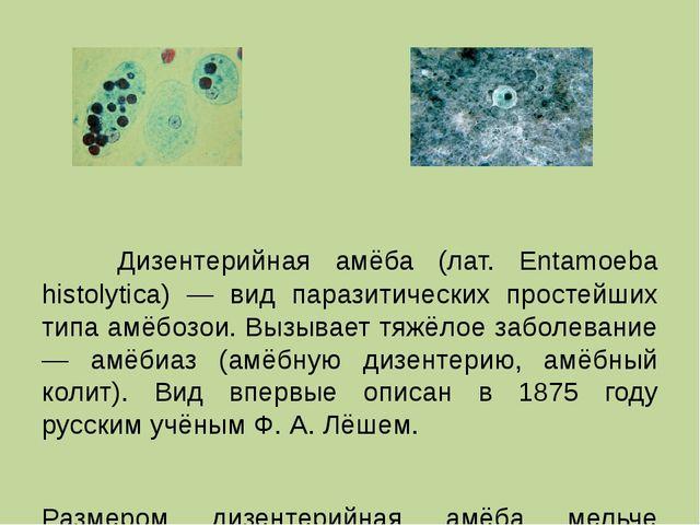 Дизентерийная амёба (лат. Entamoeba histolytica) — вид паразитических просте...