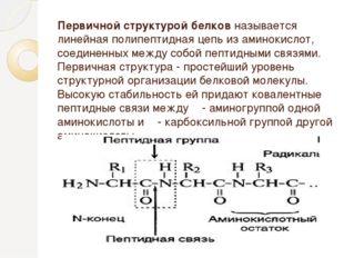 Первичной структурой белков называется линейная полипептидная цепь из аминоки