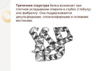 Третичная структура белка возникает при плотном укладывании спирали в клубок