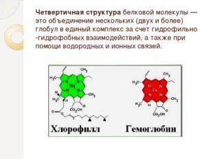 Четвертичная структурабелковой молекулы — это объединение нескольких (двух и