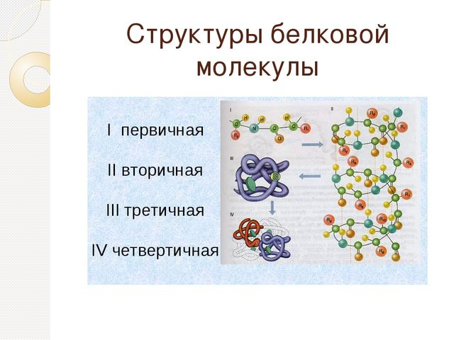 Структуры белковой молекулы