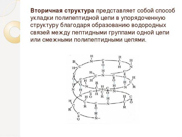 Вторичная структура представляет собой способ укладки полипептидной цепи в уп...