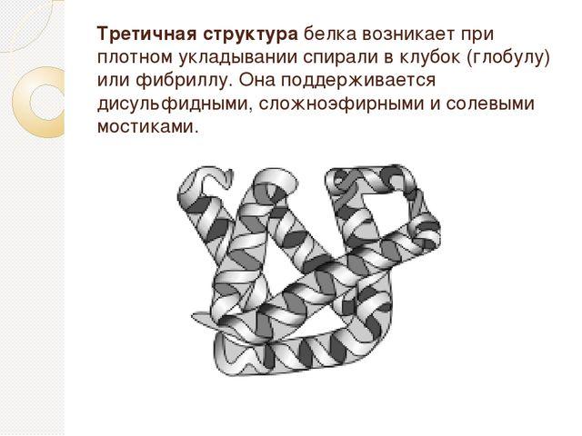 Третичная структура белка возникает при плотном укладывании спирали в клубок...