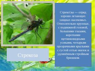 Стрекоза Стреко́зы — отряд хорошо летающих хищных насекомых. Относительно кру