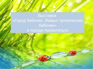 Выставка «Город бабочек. Живых тропических бабочек» в городе Архангельск