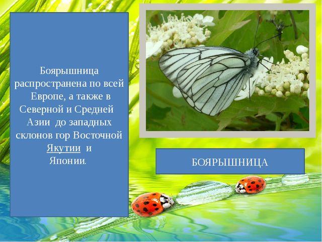 Боярышница распространена по всей Европе, а также в Северной и Средней Азии...