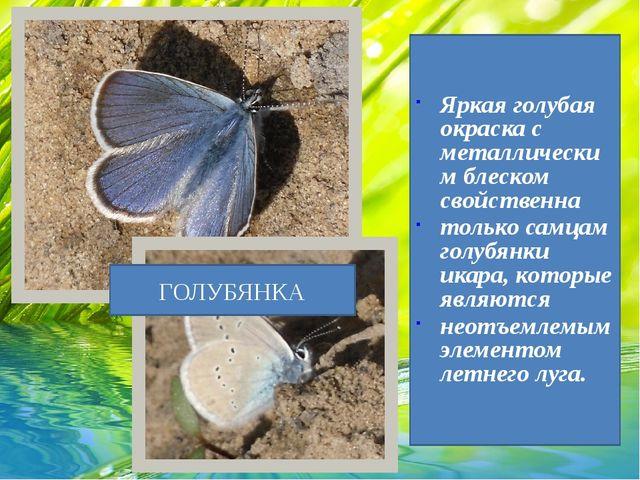 Яркая голубая окраска с металлическим блеском свойственна только самцам голуб...
