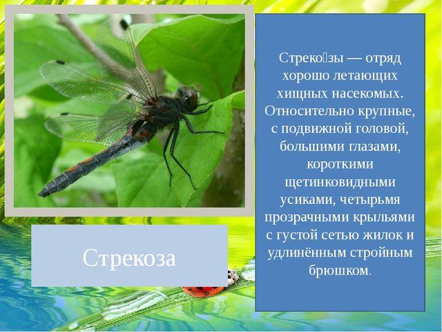 Стрекоза Стреко́зы — отряд хорошо летающих хищных насекомых. Относительно кру...