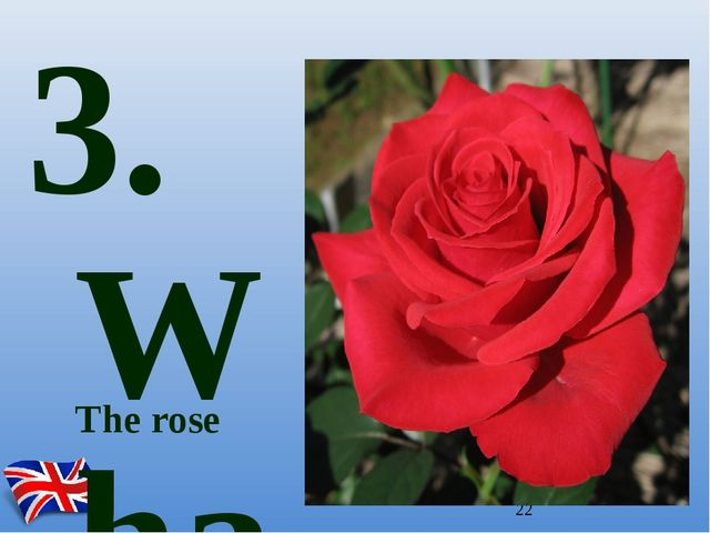 The rose 3. What is the emblem of England?