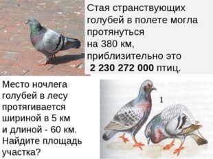Место ночлега голубей в лесу протягивается шириной в 5 км и длиной - 60 км. Н