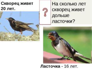 На сколько лет скворец живет дольше ласточки? Скворец живет 20 лет. Ласточка