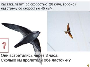 Касатка летит со скоростью 28 км/ч, воронок навстречу со скоростью 45 км/ч. О