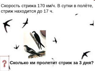 Скорость стрижа 170 км/ч. В сутки в полёте, стриж находится до 17 ч. Сколько