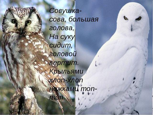 Совушка- сова, большая голова, На суку сидит, головой вертит. Крыльями хлоп-х...
