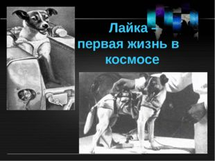 Лайка – первая жизнь в космосе