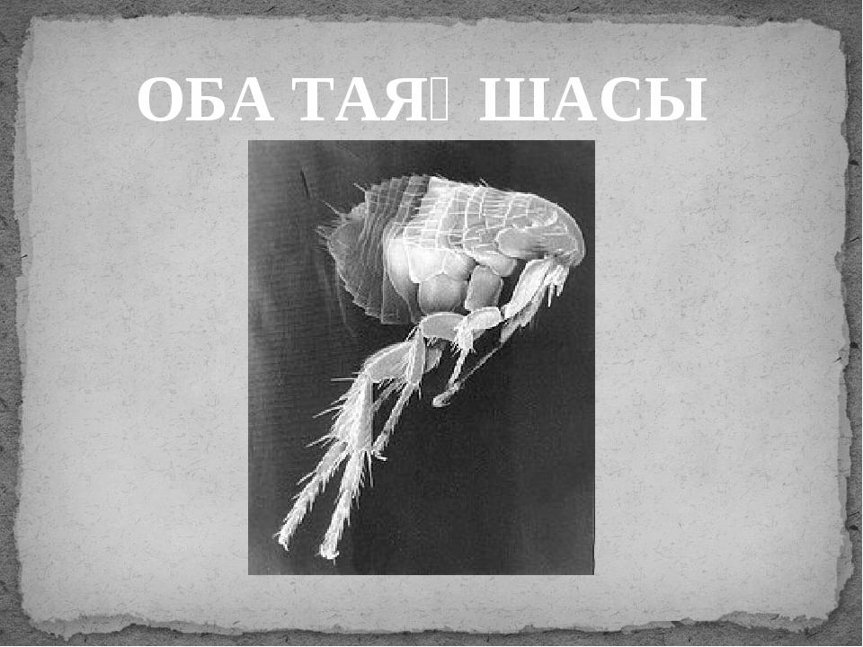 ОБА ТАЯҚШАСЫ