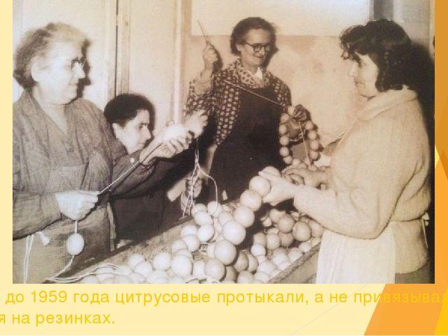 Вплоть до 1959 года цитрусовые протыкали, а не привязывали, как сегодня на ре...