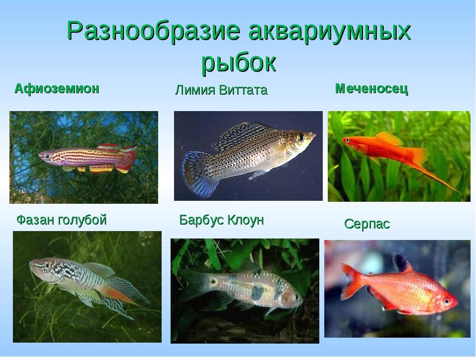 Все названия аквариумных рыбок с картинками несмотря название