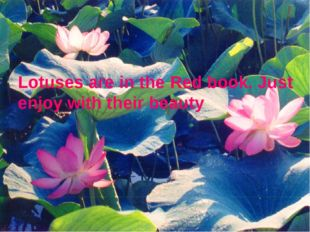 Lotuses are in the Red book. Just enjoy with their beauty