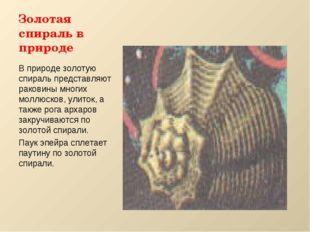 Золотая спираль в природе В природе золотую спираль представляют раковины мно