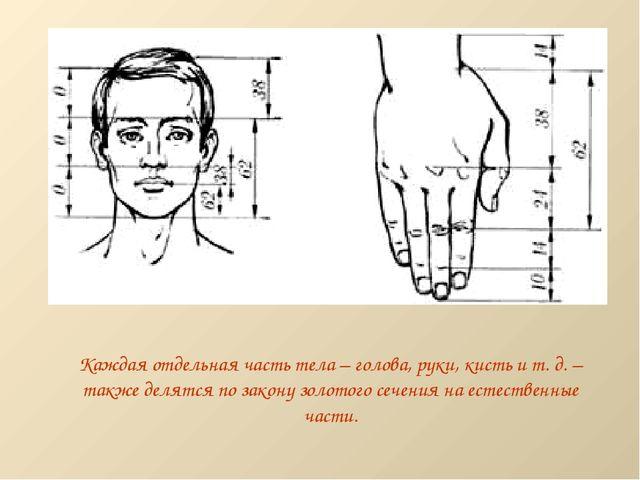 Каждая отдельная часть тела – голова, руки, кисть и т. д. – также делятся по...