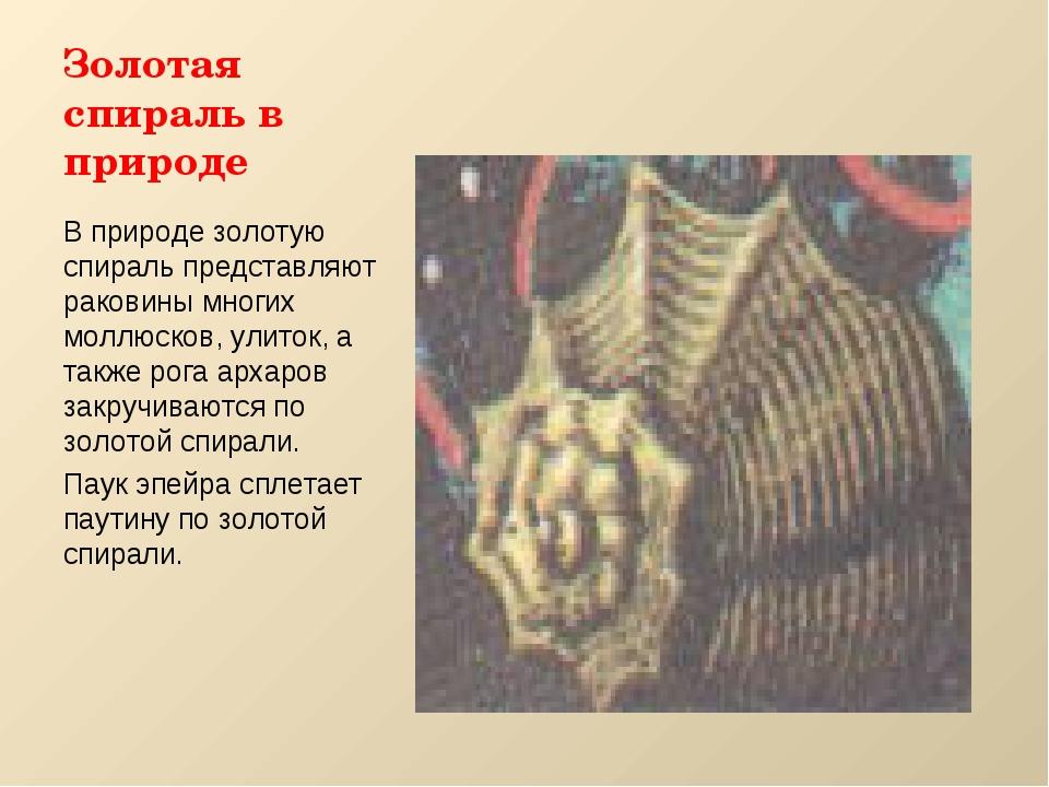 Золотая спираль в природе В природе золотую спираль представляют раковины мно...