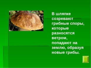 В шляпке созревают грибные споры, которые разносятся ветром, попадают на земл