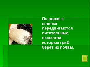 По ножке к шляпке передвигаются питательные вещества, которые гриб берёт из п