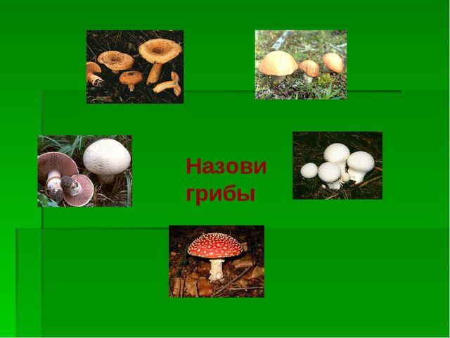 Назови грибы