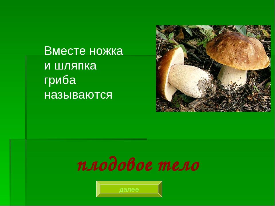 Вместе ножка и шляпка гриба называются плодовое тело далее