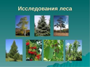 Исследования леса