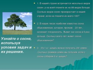 1. В нашей стране встречается несколько видов сосен ,а на всей планете их на
