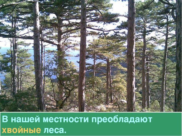 В нашей местности преобладают хвойные леса.