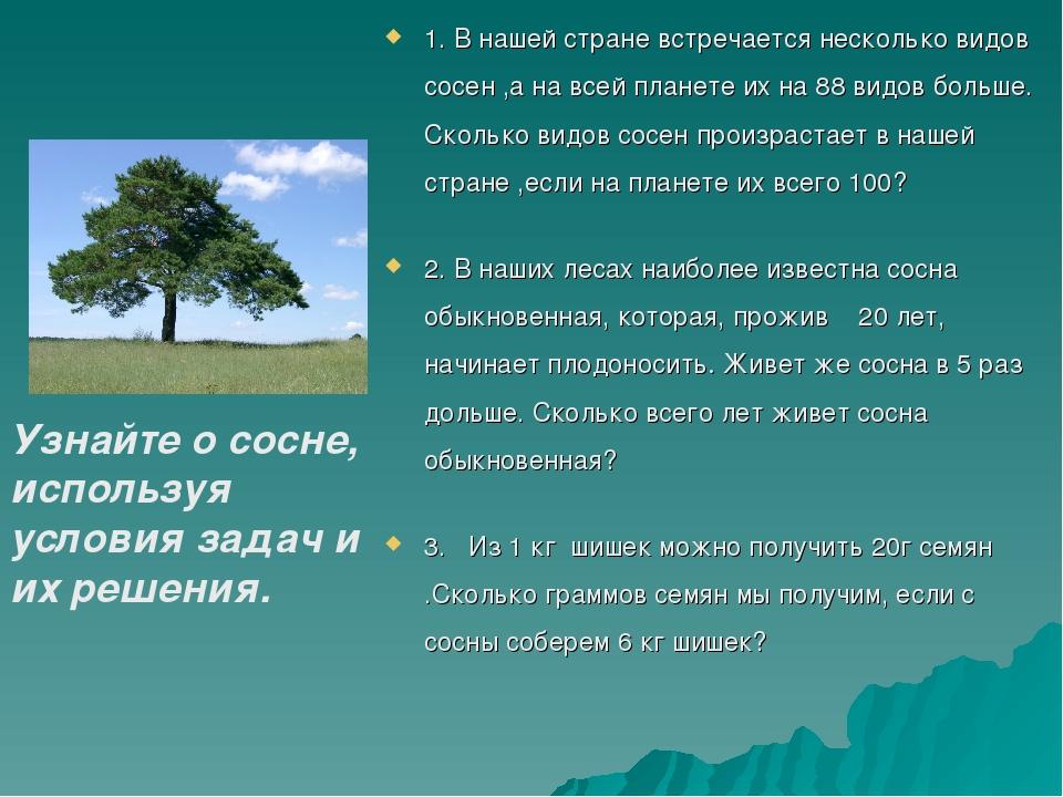 1. В нашей стране встречается несколько видов сосен ,а на всей планете их на...