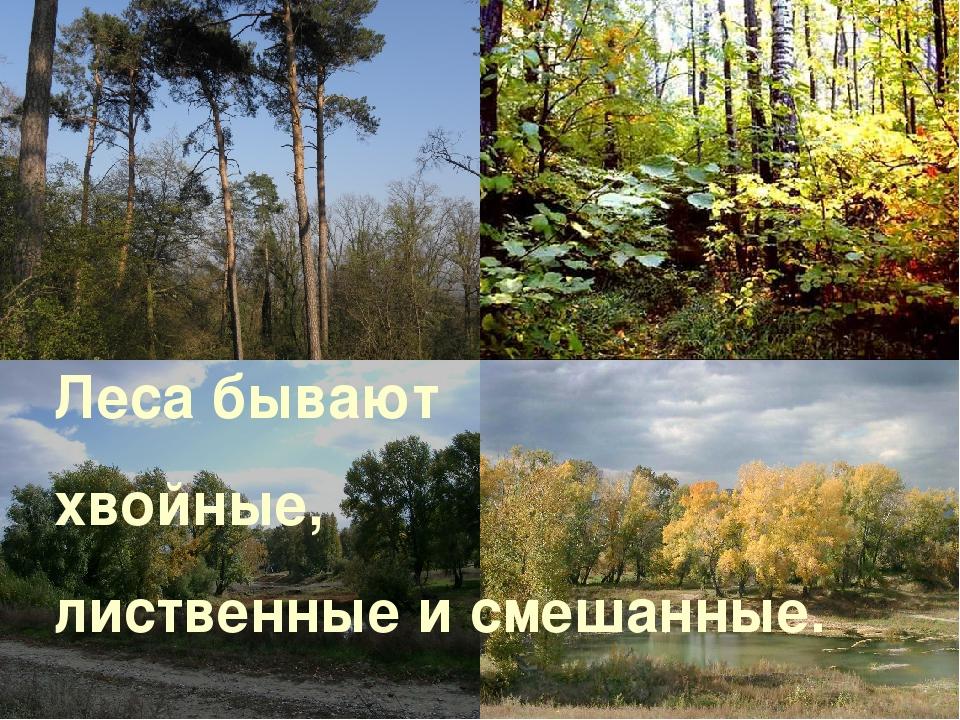 Леса бывают хвойные, лиственные и смешанные.