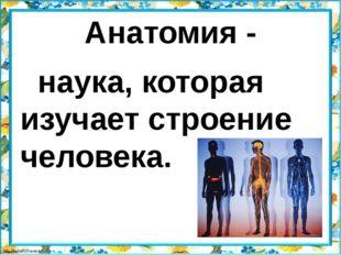 Анатомия - наука, которая изучает строение человека.