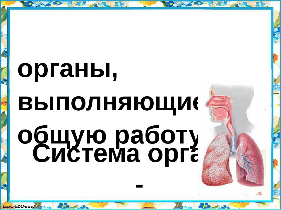 Система органов - органы, выполняющие общую работу.