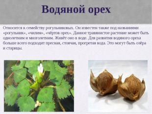 Водяной орех Относится к семейству рогульниковых. Он известен также под назва