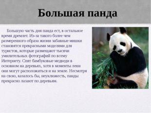 Большую часть дня панда ест, в остальное время дремлет. Из-за такого более ч