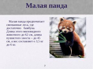 Малая панда Малая панда предпочитает смешанные леса, где достаточно бамбука.