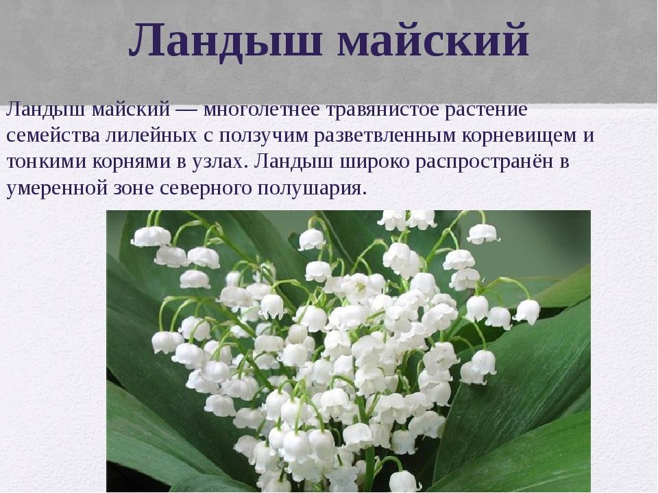 Ландыш майский Ландыш майский — многолетнее травянистое растение семейства ли...