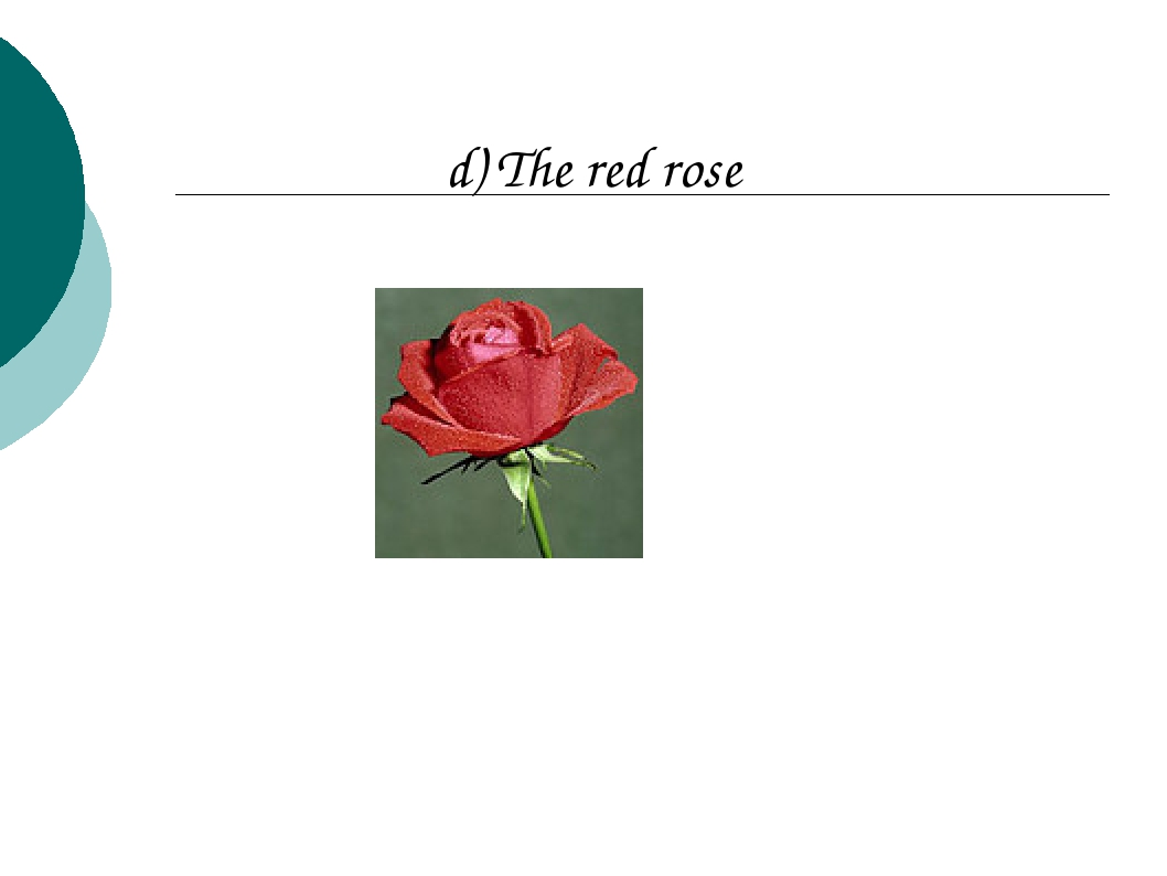 d) The red rose