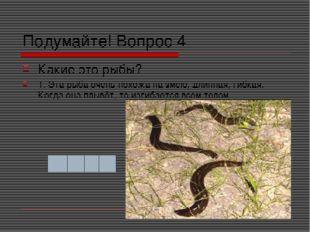 Подумайте! Вопрос 4 Какие это рыбы? 1. Эта рыба очень похожа на змею, длинная