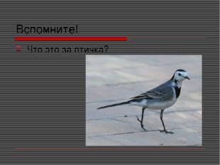 Вспомните! Что это за птичка?